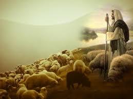 shepherd 4
