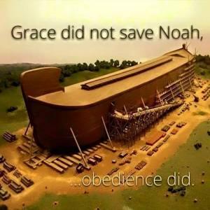 grace 5