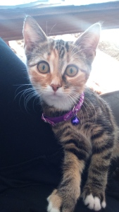 katt 2